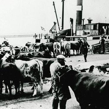 Landbruget under besættelsen